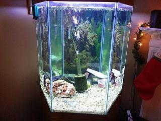 60 Gal Hex Plant Stocking Suggestions Aquarium Advice Aquarium Forum Community