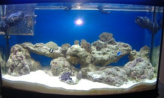 Click image for larger version  Name:full tank shot 008 Large Web view.jpg Views:1328 Size:86.4 KB ID:13594