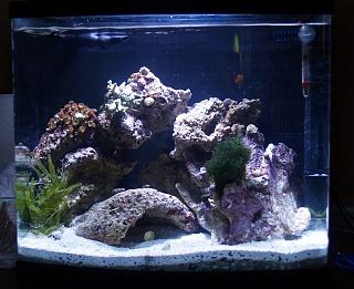Click image for larger version  Name:aquarium.jpg Views:65 Size:88.1 KB ID:13723