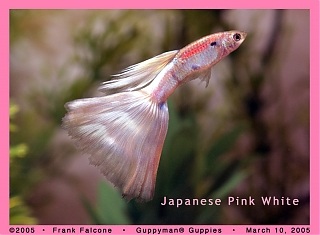 Click image for larger version  Name:jpw_1h_aa.jpg Views:112 Size:93.1 KB ID:1373