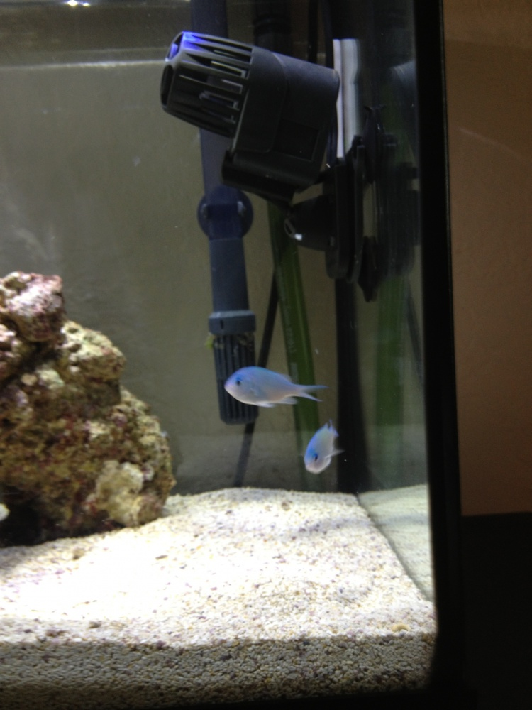 Click image for larger version  Name:new fish.jpg Views:98 Size:175.1 KB ID:137865