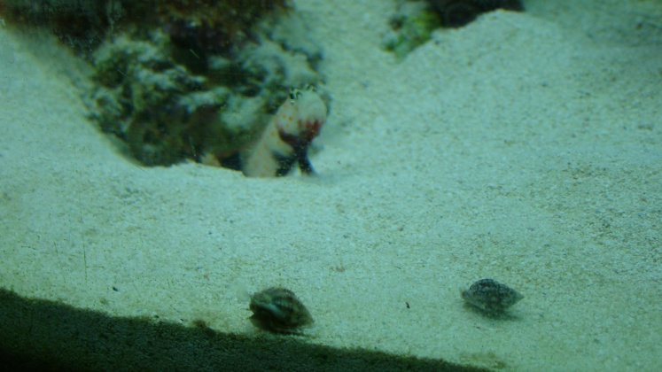 Click image for larger version  Name:goby 001.jpg Views:38 Size:107.2 KB ID:13906