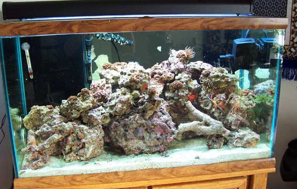 Click image for larger version  Name:tank-with-rock.jpg Views:258 Size:43.9 KB ID:1409