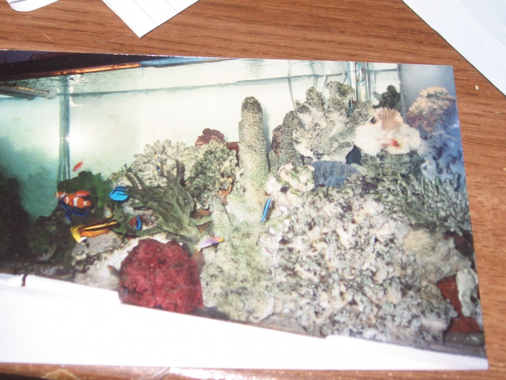 Click image for larger version  Name:75 Gal Tank.jpg Views:55 Size:241.8 KB ID:141131