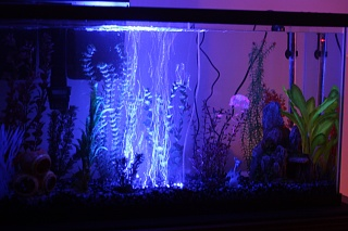 Click image for larger version  Name:Aquarium Nov 2012 034.jpg Views:57 Size:186.8 KB ID:141364