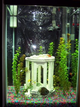 Click image for larger version  Name:full tank 2 071408.jpg Views:48 Size:80.7 KB ID:14218