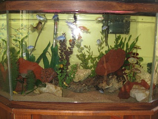 Click image for larger version  Name:fish and computer 005.jpg Views:41 Size:229.0 KB ID:142236
