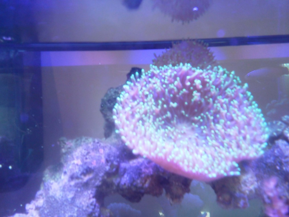 Click image for larger version  Name:soft coral.jpg Views:114 Size:174.2 KB ID:142557
