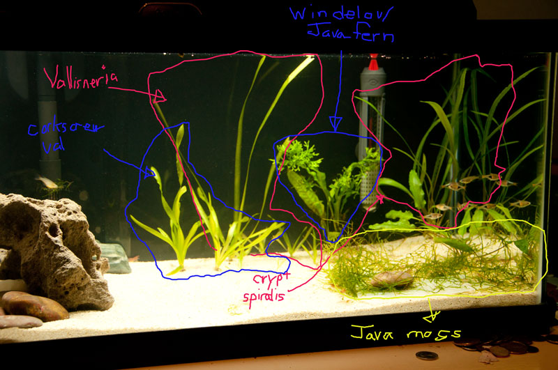 Click image for larger version  Name:15-gallon-plants.jpg Views:79 Size:114.2 KB ID:143300
