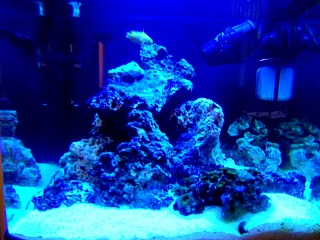 Click image for larger version  Name:fts actinic.jpg Views:878 Size:90.1 KB ID:14355