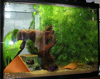 Click image for larger version  Name:tank0713-1.jpg Views:48 Size:119.9 KB ID:14418