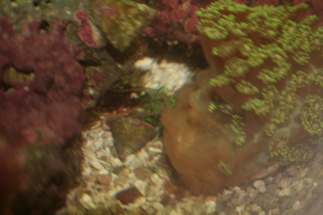 Click image for larger version  Name:1 What's wrong with flower pot coral 005.jpg Views:211 Size:76.3 KB ID:14434