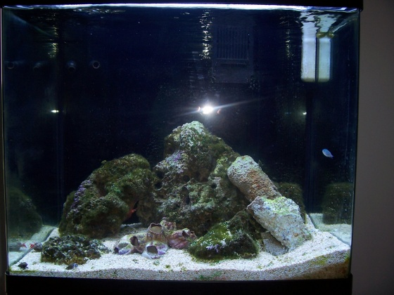 Click image for larger version  Name:dmreichman 34 gallon sw.jpg Views:45 Size:88.3 KB ID:14465