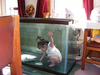 Click image for larger version  Name:Fish Tank 011.jpg Views:55 Size:84.6 KB ID:14522