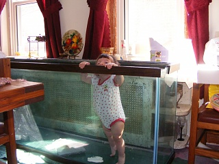 Click image for larger version  Name:Fish Tank 012.jpg Views:54 Size:87.1 KB ID:14523