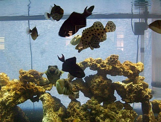 Click image for larger version  Name:fish 010.jpg Views:62 Size:122.7 KB ID:14639