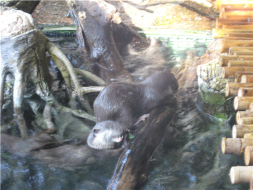 Click image for larger version  Name:otters1.jpg Views:28 Size:43.6 KB ID:14842