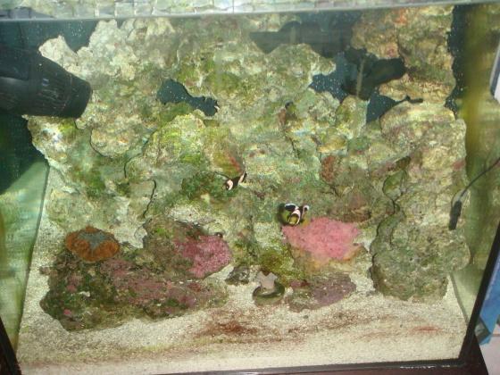 Click image for larger version  Name:aquarium 9.4 brown hair algea 019.jpg Views:88 Size:131.7 KB ID:15001