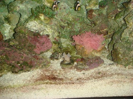 Click image for larger version  Name:aquarium 9.4 brown hair algea 017.jpg Views:83 Size:142.3 KB ID:15007