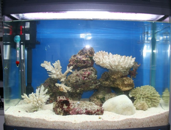 Click image for larger version  Name:tank2.jpg Views:46 Size:92.0 KB ID:15254