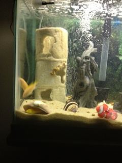 Creative Cave Ideas Aquarium Advice Aquarium Forum Community