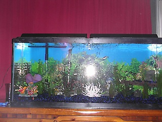 Click image for larger version  Name:fish tank 001.jpg Views:700 Size:64.9 KB ID:15669