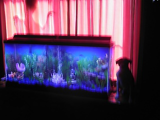Click image for larger version  Name:fish tank 014.jpg Views:681 Size:56.4 KB ID:15670