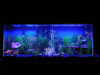 Click image for larger version  Name:fish tank 008.jpg Views:726 Size:56.6 KB ID:15671