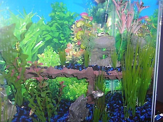 Click image for larger version  Name:fish tank 013.jpg Views:647 Size:68.7 KB ID:15673