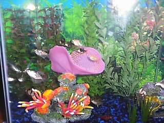 Click image for larger version  Name:fish tank 012.jpg Views:656 Size:70.5 KB ID:15674