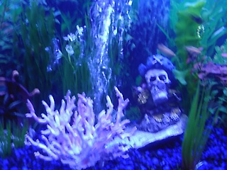 Click image for larger version  Name:fish tank 010.jpg Views:625 Size:65.6 KB ID:15675