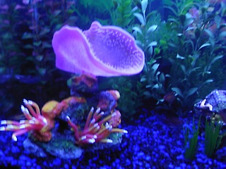 Click image for larger version  Name:fish tank 009.jpg Views:65 Size:64.5 KB ID:15681