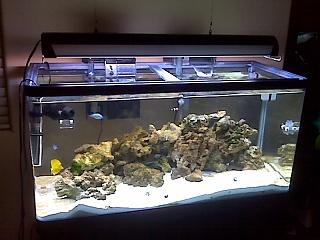 60 gallon aquarium tank for 60 gallon fish tank