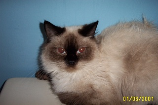 Click image for larger version  Name:kitty 005.jpg Views:39 Size:59.4 KB ID:15802