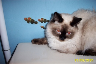 Click image for larger version  Name:kitty 006.jpg Views:38 Size:59.7 KB ID:15803