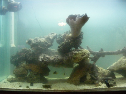 Click image for larger version  Name:Fish Tank 085.jpg Views:64 Size:61.0 KB ID:15821