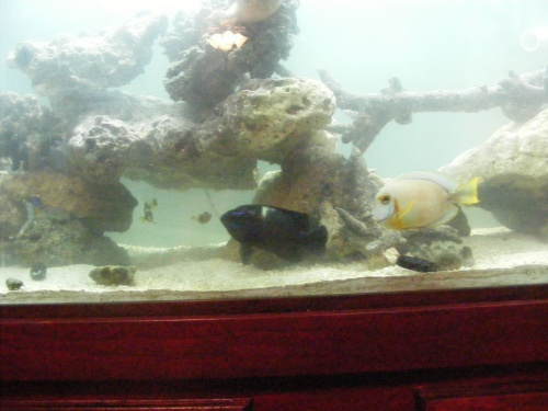 Click image for larger version  Name:Fish Tank 087.jpg Views:51 Size:61.6 KB ID:15822