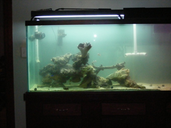 Click image for larger version  Name:Fish Tank 098.jpg Views:59 Size:58.8 KB ID:15823