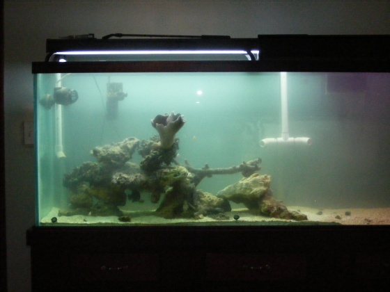 Click image for larger version  Name:Fish Tank 100.jpg Views:55 Size:58.3 KB ID:15824