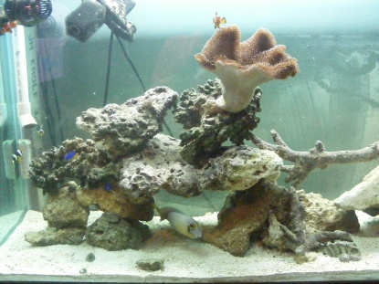 Click image for larger version  Name:Fish Tank 110.jpg Views:59 Size:63.1 KB ID:15826