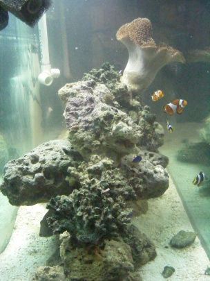 Click image for larger version  Name:Fish Tank 111.jpg Views:55 Size:59.6 KB ID:15827