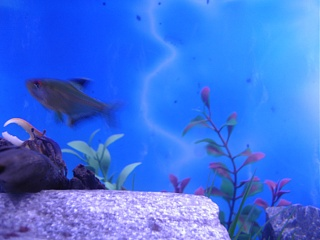 Click image for larger version  Name:new fish 004.jpg Views:81 Size:59.4 KB ID:15850
