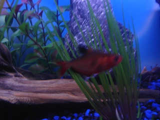 Click image for larger version  Name:new fish 006.jpg Views:79 Size:61.4 KB ID:15853