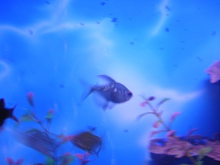 Click image for larger version  Name:new fish 008.jpg Views:73 Size:44.8 KB ID:15855
