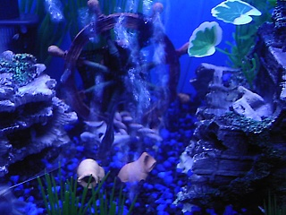 Click image for larger version  Name:new fish 016.jpg Views:79 Size:66.2 KB ID:15863