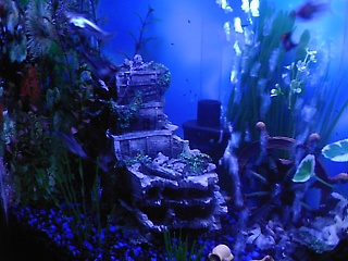 Click image for larger version  Name:new fish 017.jpg Views:79 Size:65.2 KB ID:15864