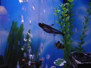 Click image for larger version  Name:new fish 025.jpg Views:81 Size:57.3 KB ID:15872