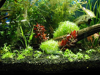 Click image for larger version  Name:plants from travis 12 002.jpg Views:204 Size:67.6 KB ID:15951