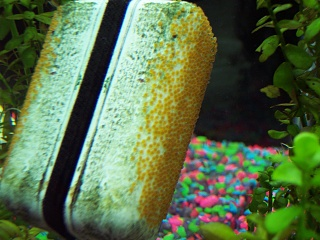 Click image for larger version  Name:eggs on scrubber 2.jpg Views:50 Size:67.4 KB ID:16230