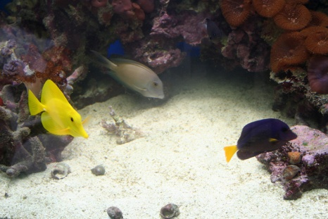 Click image for larger version  Name:tangs 11-08.jpg Views:52 Size:64.6 KB ID:16241